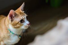 Den orange gulliga katten royaltyfri foto