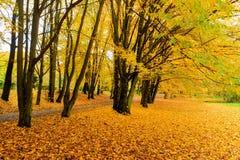 Den orange hösten lämnar Arkivbild