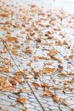 Den orange hösten lämnar låter vara det svarta bruna färgbegreppet för bakgrund få green lönnsäsong till Arkivfoto