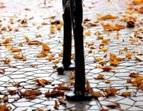 Den orange hösten lämnar låter vara det svarta bruna färgbegreppet för bakgrund få green lönnsäsong till Royaltyfria Bilder