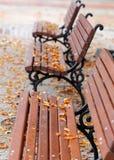 Den orange hösten lämnar låter vara det svarta bruna färgbegreppet för bakgrund få green lönnsäsong till Royaltyfri Foto