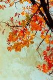 Den orange kastanjen lämnar grungy bakgrund Fotografering för Bildbyråer