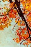 Den orange kastanjen lämnar grungy bakgrund Arkivbild