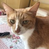 Den orange katten Royaltyfri Fotografi