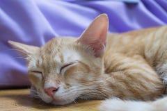 Den orange kattsömnen på tabellen Arkivfoto