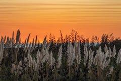 Den orange solnedgången mot vitt toetoegräs putsar royaltyfri foto