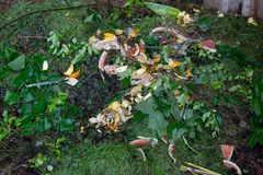 Den organiska composting biologiskt nedbrytbar förlorade högen, grönsak, bär frukt bio royaltyfri foto