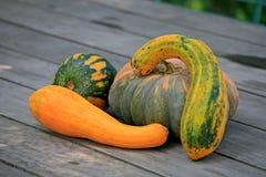 Den organiska cucurbitaen bär frukt, Le Sambuc, Arles, Bouche-du-RhÃ'ne fotografering för bildbyråer