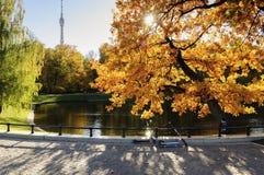 Den Ostankino staden parkerar på höst royaltyfria bilder