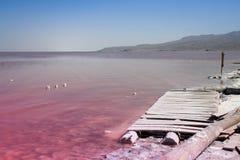 Den ovanliga rosa sjön Urmia som är full av, saltar royaltyfria bilder