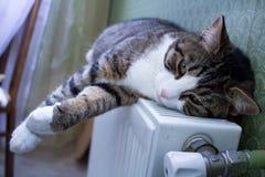 Den päls- älsklings- katten ligger på det varma elementet som vilar och kopplar av fotografering för bildbyråer