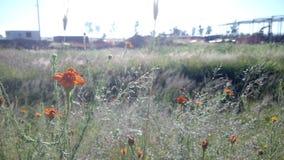 Den pånyttfödda blomman Arkivfoton