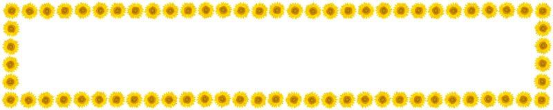 Den panorama- ramen av solrosen blommar på isolerad vit backgroun royaltyfri fotografi