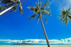 Den panorama- tropiska stranden med kokosnöten gömma i handflatan blå himmel. Koh Samui, Arkivbild