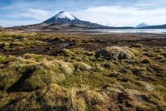 Den Parinacota vulkan reflekterade i sjön Chungara, Chile Arkivbilder