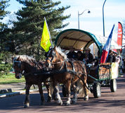 Den Paris hästen ståtar Arkivfoto