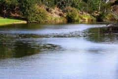 Den Parramatta floden uppströms @ Parramatta parkerar, Sydney Arkivbild