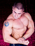 Den perfekta muskulösa modellen arkivfoto