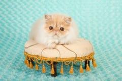 Den persiska kattungen på fot pallr Royaltyfri Fotografi