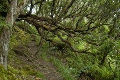 Den Pihea slingan, Kauai Hawaii, Kokee parkerar slingan Arkivbilder