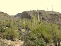 Den Pima kanjonen landskap Arkivfoto