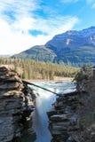 Den pittoreska athabascaen faller floden Kanada Royaltyfria Foton