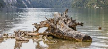 Den pittoreska drivveden på sjön Konigssee Royaltyfria Foton