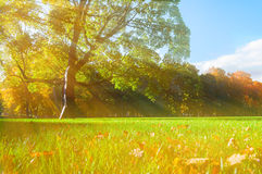Den pittoreska hösten parkerar - soliga höstträd som tänds av solljus Höstnatur i solstrålar Arkivbild