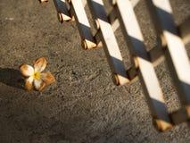 Den Plumeria vissnade blommanedgången på golvet Fotografering för Bildbyråer
