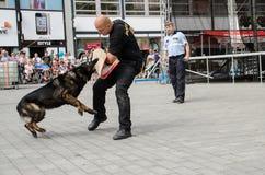Den policie Brno. Police day on Náměstí Svobody in Brno royalty free stock photos