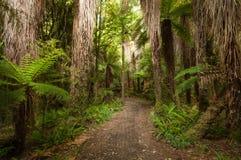 Den Ponga skogen på Ohakune den gamla lagledarevägen går Royaltyfri Bild