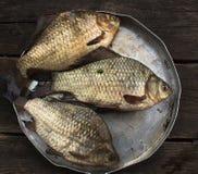 Den rå fisken för floden - kverulera, i en rund platta arkivfoto