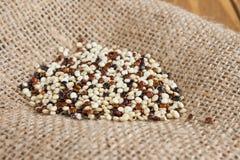 Den rå quinoaen kärnar ur tätt upp Fotografering för Bildbyråer