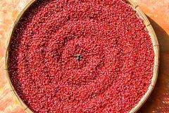 Den röda bönan torkade nytt, på vide- korgar royaltyfri fotografi
