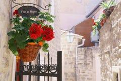 Den röda blomman och ett tecken i shoppar arkivbild