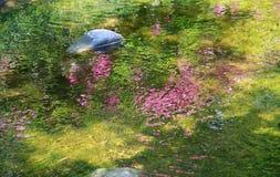 Den röda blomman som reflekterar i yttersidan av vattnet av floden Royaltyfri Bild