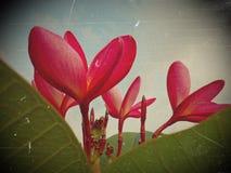 Den röda blommatappningen Fotografering för Bildbyråer