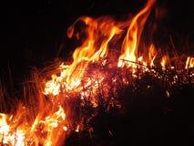 Den röda branden som snärtade på golvsvarten royaltyfria bilder