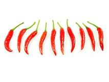 Den röda chili sporrar peppar fotografering för bildbyråer