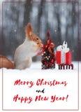 Den röda ekorren dekorerar en julgran om det lyckliga nya året för kort Fotografering för Bildbyråer