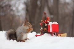 Den röda ekorren dekorerar en julgran om det lyckliga nya året för kort Arkivfoto