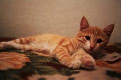 Den r?da fluffiga katten ligger p? baksidan av soffan arkivbilder