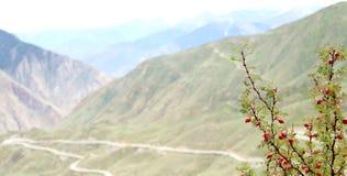 Den röda granatäpplet bor på höglands- område fotografering för bildbyråer