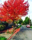 Den röda hösten Arkivfoton