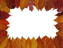 Den röda hösten låter vara ramen Royaltyfri Foto