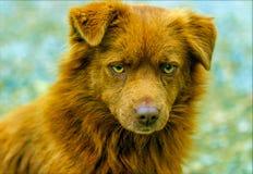 Den röda hunden är mycket gladlynt, fullt av optimism! royaltyfri bild