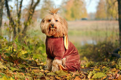 Den röda hunden sitter i solen Royaltyfri Foto