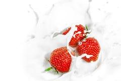 Den röda jordgubben bär frukt falla in i de mjölkaktiga splasna royaltyfri bild