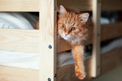 Den röda katten ligger på en säng Royaltyfri Foto