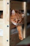 Den röda katten ligger på en säng Arkivfoton